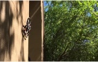 Image - Mire el techo: Este 'dron araña' lo puede estar espiando sin que se dé cuenta